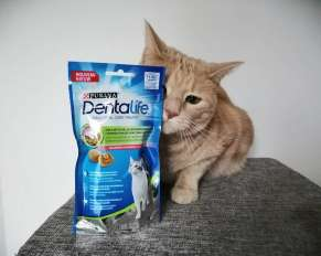 Dentalife pour chats adultes